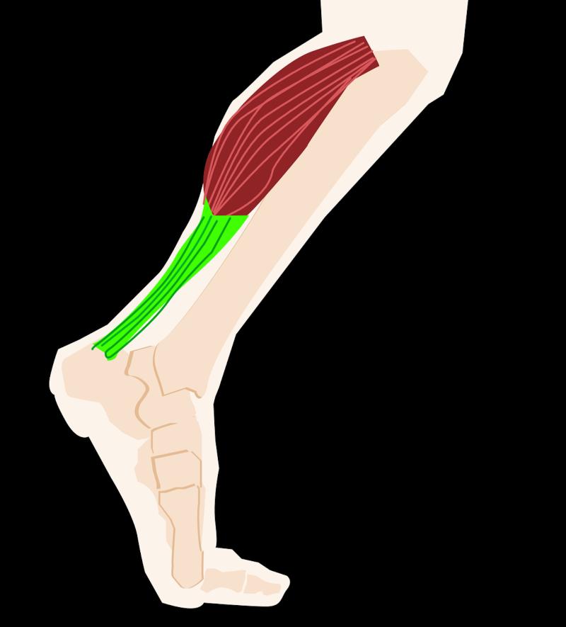 osteopathie - osteopathie – osteopathie nice – osteopathe – osteopathe nice - osteo nice – osteo - kine osteo - kine osteo nice – quartier liberation nice – erwan motais - orthese - erwan motais osteo - kinesiotaping - kinesiologie - LPG- Endermologie - CelluM6 - LPG Nice – kine de la main – rééducation – rééducation coude – rééducation poignet – ostéopathie gynécologie – ostéopathie bébé – ostéopathie obstétrique – ostéo sportnice - kine osteo - kine osteo nice - quartier liberation nice - erwan motais - orthese - erwan motais osteo - osteo nice - kinesiotaping - kinesiologie - fascias - plagiocéphalie